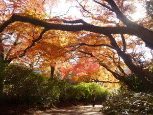 清水公園紅葉1