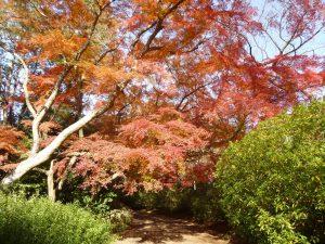 清水公園紅葉3